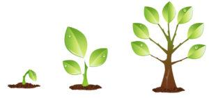 seedling-1