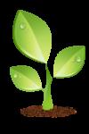 seedling_06
